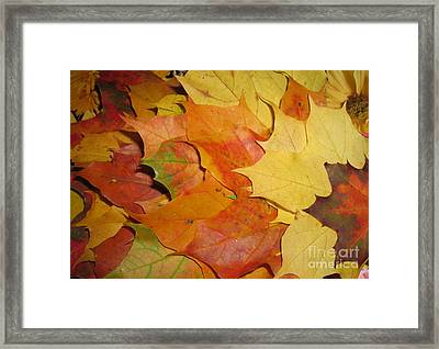 Maple Rainbow Framed Print by Ausra Paulauskaite