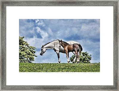 Mare And Foal Framed Print by Steve Purnell