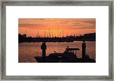 Marina Colors 4 Framed Print by Fraida Gutovich
