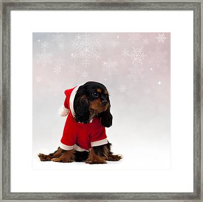 Marmaduke On Snow Background Framed Print by Jane Rix