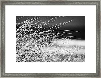Marram Grass On Sand Dunes On Beach County Derry Londonderry Northern Ireland Uk Framed Print by Joe Fox