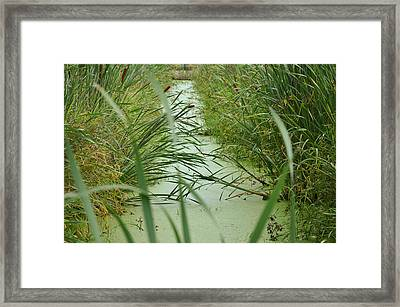 Marsh-field Ma Framed Print by Christine Stonebridge
