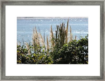Marsh Framed Print by Static Studios