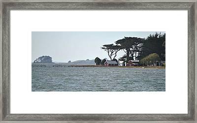 Marshall Framed Print by Nimmi Solomon