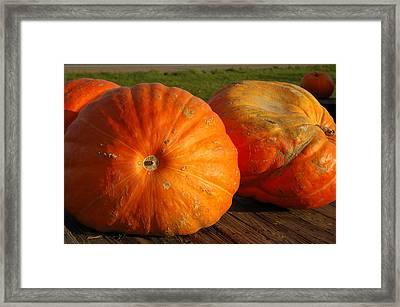 Mass Pumpkins Framed Print by LeeAnn McLaneGoetz McLaneGoetzStudioLLCcom