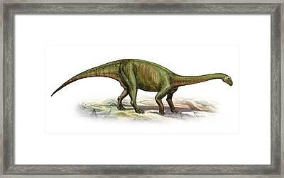 Massospondylus Carinatus, A Prehistoric Framed Print by Sergey Krasovskiy