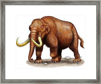 Mastodon Framed Print by Roger Hall and Photo Researchers