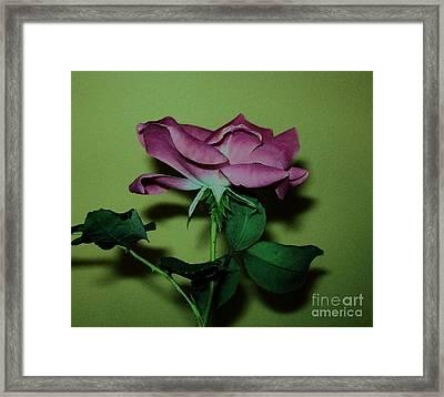 Mauve Rose Side View Framed Print by Marsha Heiken