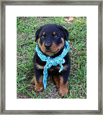 Maxx Framed Print by Rebecca Morgan