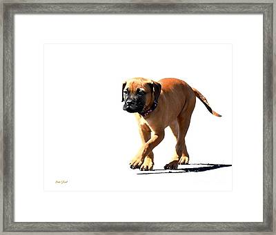 Me And My Shadow 5 Framed Print by Dale   Ford