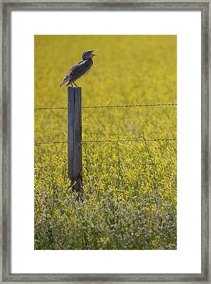 Meadowlark Singing Framed Print by Randall Nyhof
