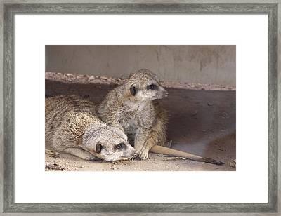 Meerkats Framed Print by Linda A Waterhouse