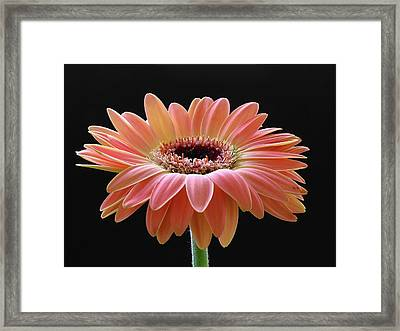Meet Me In The Morning Framed Print by Juergen Roth