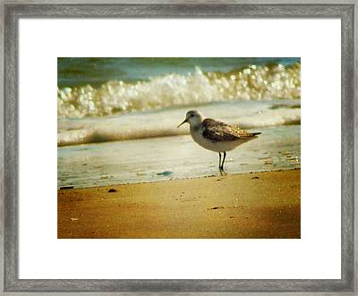 Memories Of Summer Framed Print by Amy Tyler