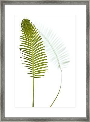 Mexican Cycad Leaf Mexico Framed Print by Piotr Naskrecki