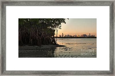 Miami With Mangroves Framed Print by Matt Tilghman