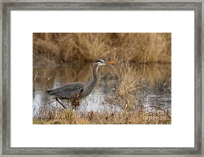 Mid-day Stroll Framed Print by Reflective Moment Photography And Digital Art Images