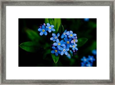 Mini Bouquet Framed Print by Travis Crockart