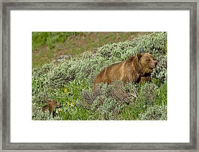 Mini Me Framed Print by Sandy Sisti
