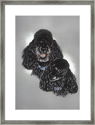 Miniature Poodles Framed Print by Patricia Ivy