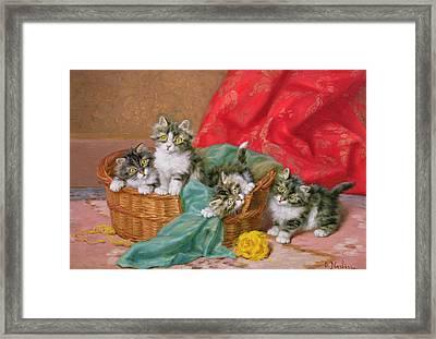Mischievous Kittens Framed Print by Daniel Merlin