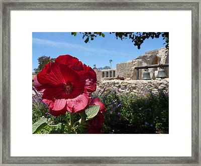 Mission Garden Framed Print by Lynette McNees