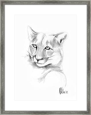 Missouri Mountain Lion  Framed Print by Kip DeVore