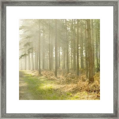 Misty Sunrise Framed Print by Paul Grand