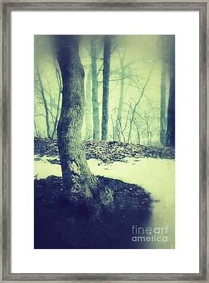 Misty Winter Woods Framed Print by Jill Battaglia