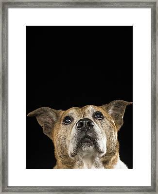 Mixed Breed Dog Looking Up Framed Print by Ryan McVay