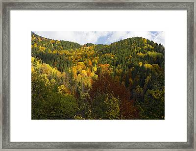 'mixed Forest, Lotrulu Mountains, Romania Framed Print by Bob Gibbons
