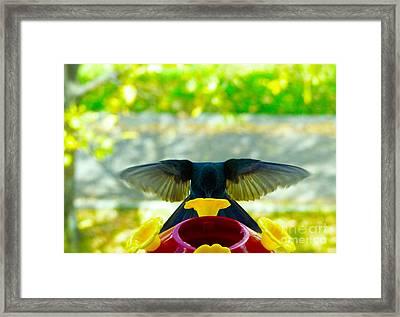 Mmmmm Good Nectar Framed Print by Al Bourassa