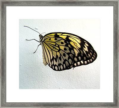 Monarch Butterflie Framed Print by Joyce Woodhouse