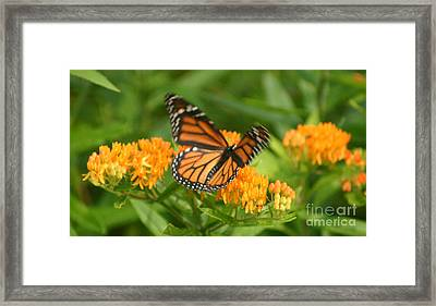 Monarch In Motion Framed Print by Robert E Alter Reflections of Infinity