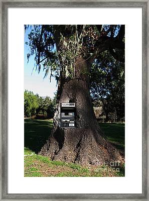 Money Tree . 7d9817 Framed Print by Wingsdomain Art and Photography