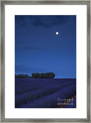 Moon Over Lavender Framed Print by Brian Jannsen