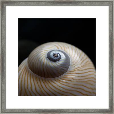 Moon Shell Framed Print by Carol Leigh