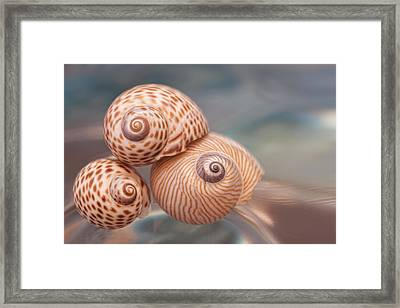 Moon Shells Framed Print by Carol Leigh