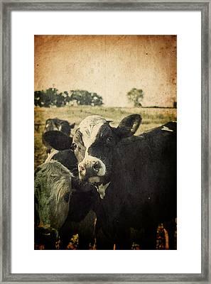 Mooove Framed Print by Joel Witmeyer