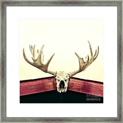 Moose Trophy Framed Print by Priska Wettstein