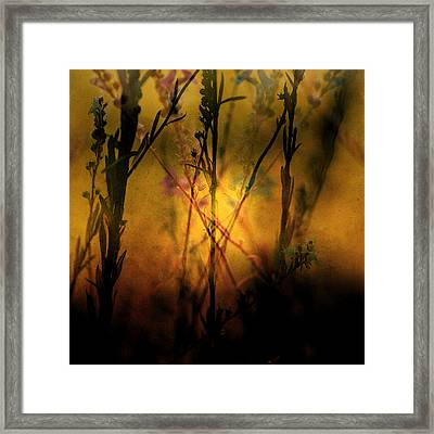 Morning Breaks In Framed Print by Bonnie Bruno