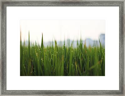 Morning Dews Framed Print by @mr.jerry