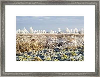 Morning Frost Framed Print by Duncan Shaw