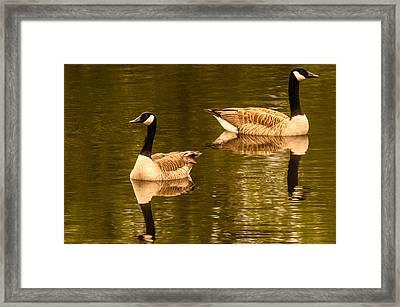 Morning Geese  Framed Print by Ken Beatty