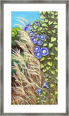 Morning Glory Framed Print by Carol OMalley