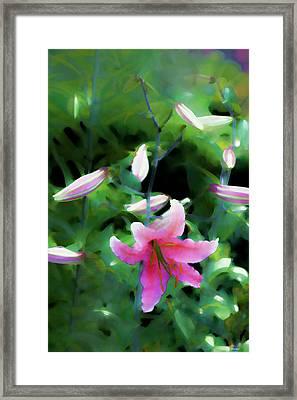 Morning Glow Framed Print by Tom Prendergast