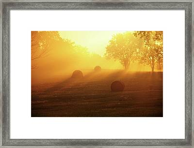 Morning Gold Sunlight Framed Print by Heather Black