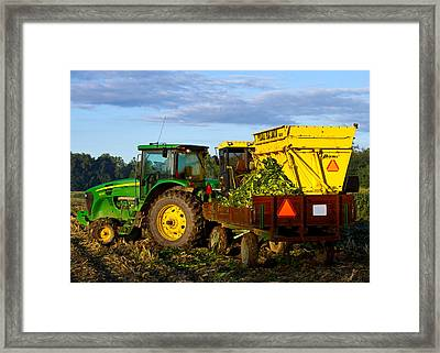 Morning Harvest Framed Print by Tim Fitzwater