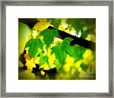 Morning  Light Framed Print by Perry Webster