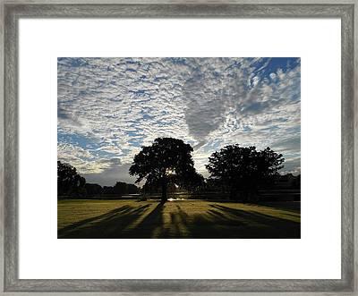 Morning Magic Framed Print by Sheila Silverstein